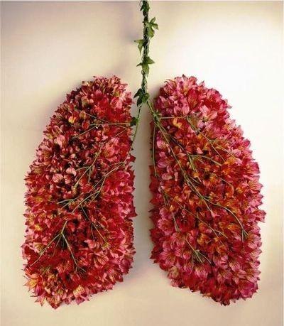 pulm.jpg